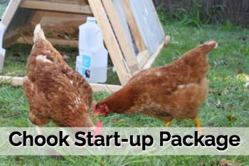 Chook Start-up Package Rentachook Sydney Buy Chicken