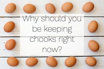 Why keeping chooks is good for you - Sydney Rentachook
